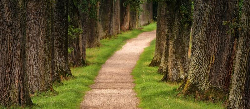 Develop Your Own Path to the Success